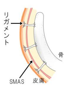 ligament1